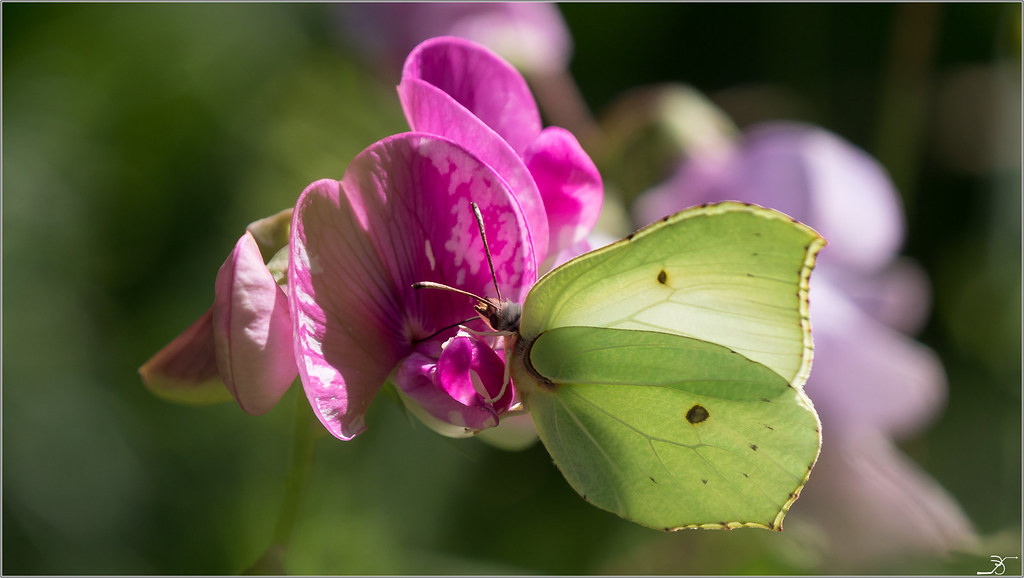 Jardin botanique Saverne: Paps 42185801915_dd2cca157c_b