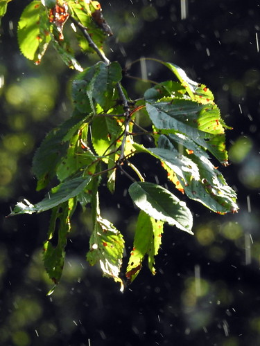 Moggio - Dopo la pioggia