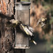 birds_on_feeder-20180620-101