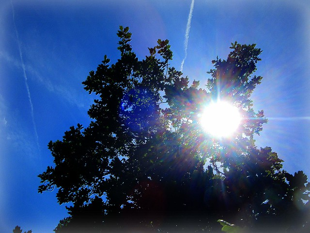 Midsummer Sun .., Canon POWERSHOT SX600 HS