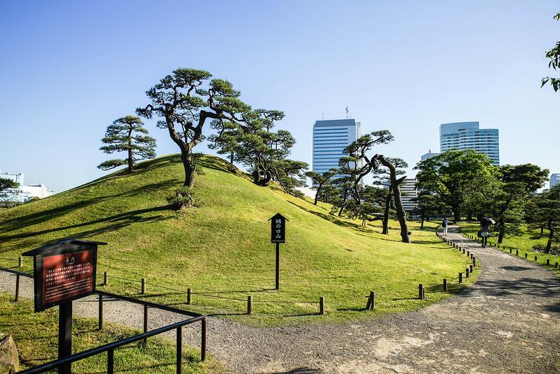 A hill at the park tree hamarikyu gardens tokyo japan