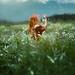 Field of Dreams by Elizabeth Gadd