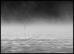 High Eske Swan in the mist