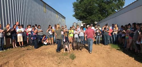2018 Livestock-Camp-Pigs
