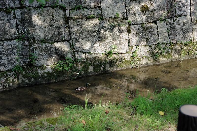 堀を進む_201807