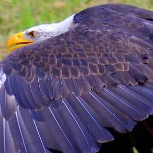 flickr all eagle1effi\u0027s tags  Gnstig Fraas 370 Bordeaux Schal Herren Online Bestellen P 1987 #16