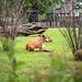 <p><a href=&quot;http://www.flickr.com/people/28703702@N08/&quot;>djsmith46</a> posted a photo:</p>&#xA;&#xA;<p><a href=&quot;http://www.flickr.com/photos/28703702@N08/29052853828/&quot; title=&quot;Berlin Zoo-19&quot;><img src=&quot;http://farm2.staticflickr.com/1807/29052853828_41c48297ab_m.jpg&quot; width=&quot;240&quot; height=&quot;180&quot; alt=&quot;Berlin Zoo-19&quot; /></a></p>&#xA;&#xA;<p>OLYMPUS DIGITAL CAMERA</p>