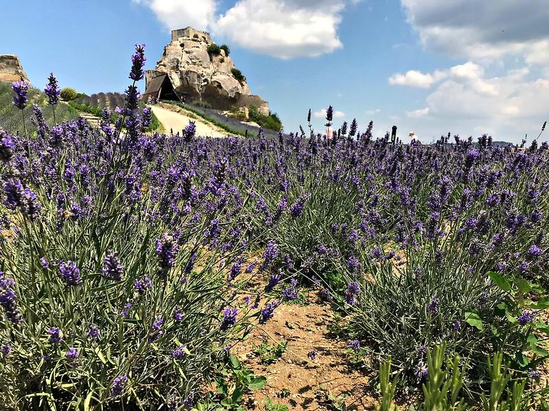 Onde ver os campos de lavanda na Provence