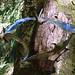 Barley, Aitken Wood - Pendle Sculpture Park., bats