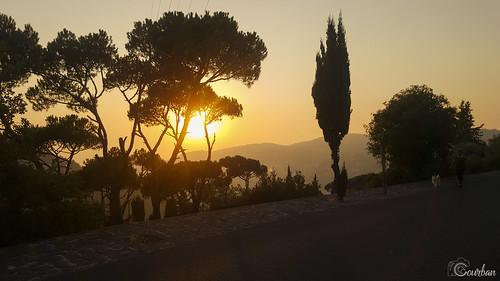 mountain tree sunset road sky landscape