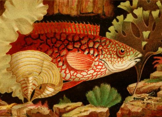 philip henry gosse victorian aquarium