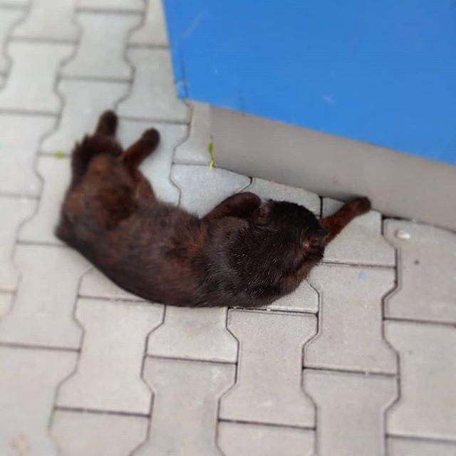 Коты, как известно, жидкость. Этот вон хоть и спрятался в тень, всё равно растёкся меховой лужицей, и старается лишний раз не шевелиться.
