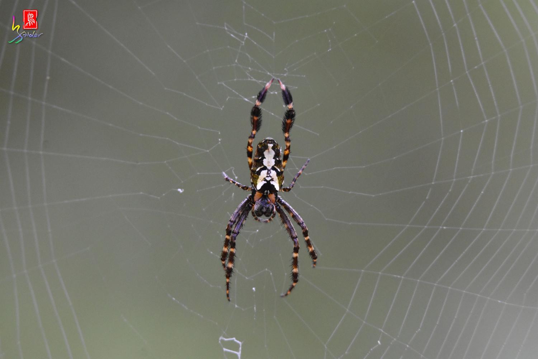 Spider_2881
