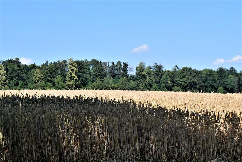 Crops 30.06 (2)