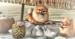 Dog's paradise