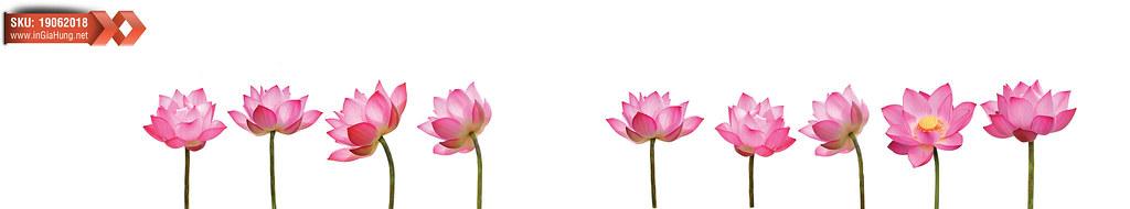 Mẫu kính cường lực màu trắng sữa in hoa sen hồng ốp bếp 19062018@KinhOpBep0418