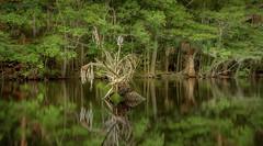 le coeur de la forêt