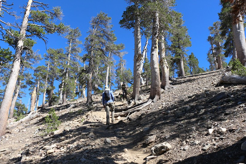 The final extra-steep use trail up to the summit of San Bernardino Peak - this part whupped us