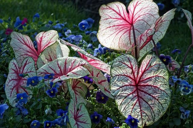 Botanical Garden, Lakeland FL, Nikon 1 J5, 1 NIKKOR VR 30-110mm f/3.8-5.6