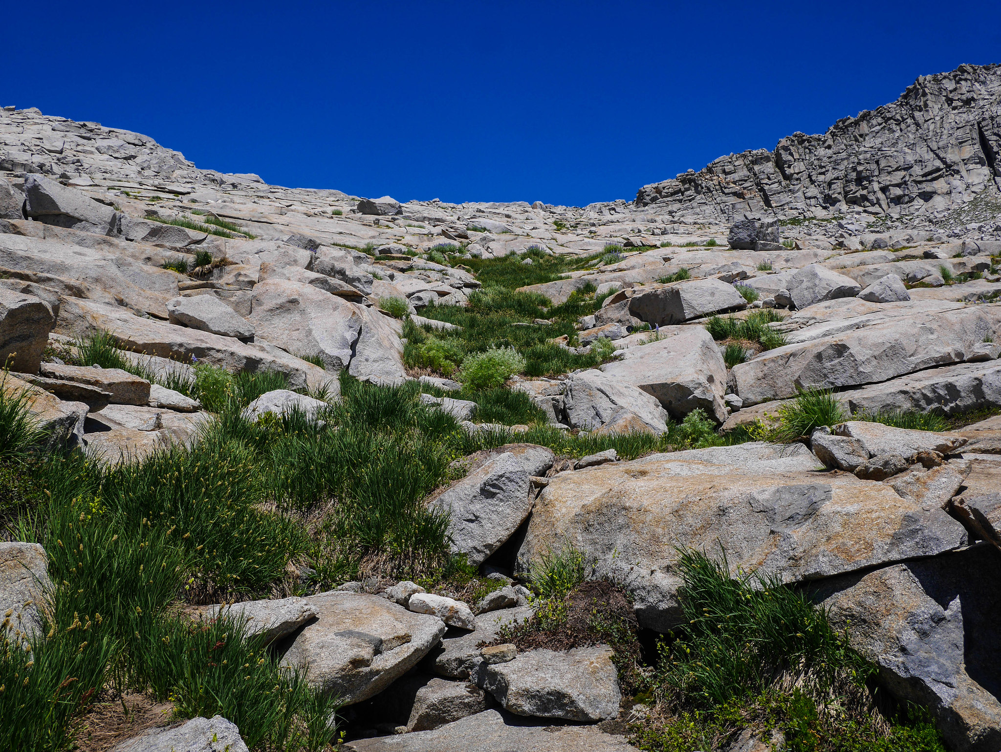 Climbing a grassy gully up to Ptetrodactyl Pass