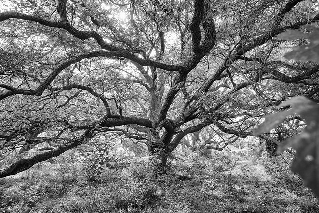 Oak Woods, Nikon D800, AF-S Nikkor 17-35mm f/2.8D IF-ED