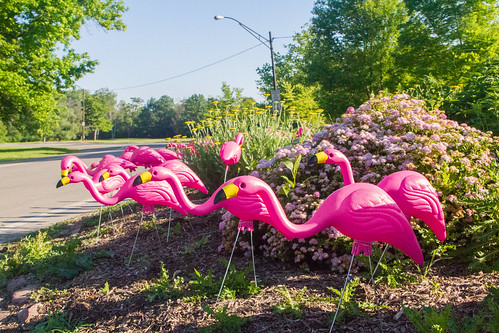 Flocks of #FLOmingos | Olmsted Park System | June 21, 2018