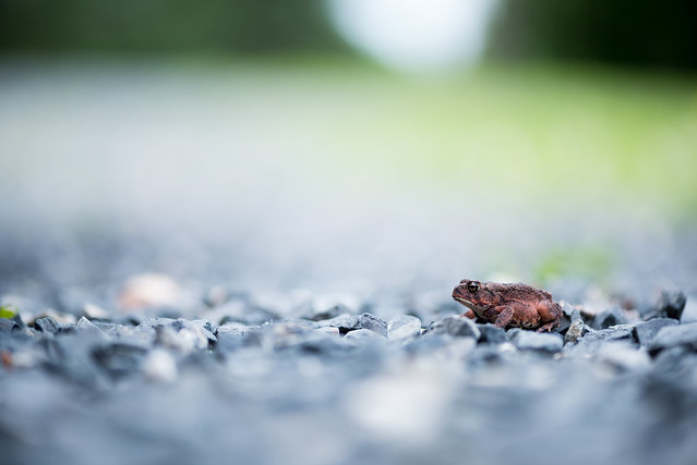 20180625 Red Toad