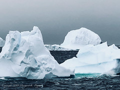 Ice Floating by as We Pass Through the Lemaire Channel, Antarctica 2
