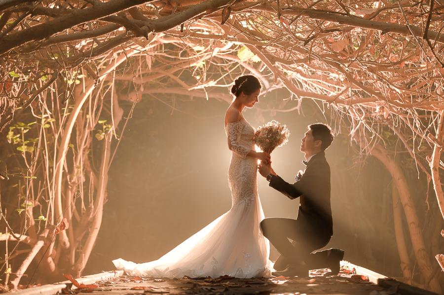 29073363628 dc81f1e7ef o 台南婚紗景點推薦 森林系仙女的外拍景點