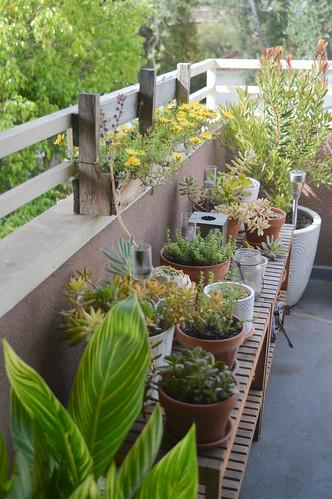 plants after the heatwave