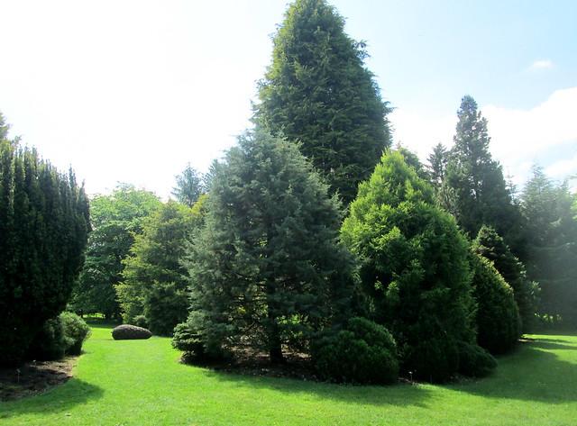 Conifers + cone