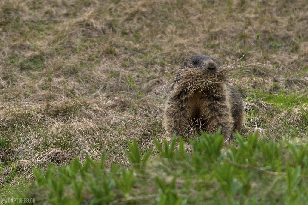 Marmot 3 - Trübsee