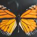 reverse-freelense-wings (240 of 353)-Edit-2