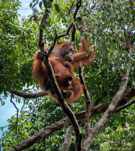 Borneo-13
