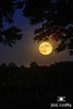Strawberry Moon and Fireflies by Jim Crotty