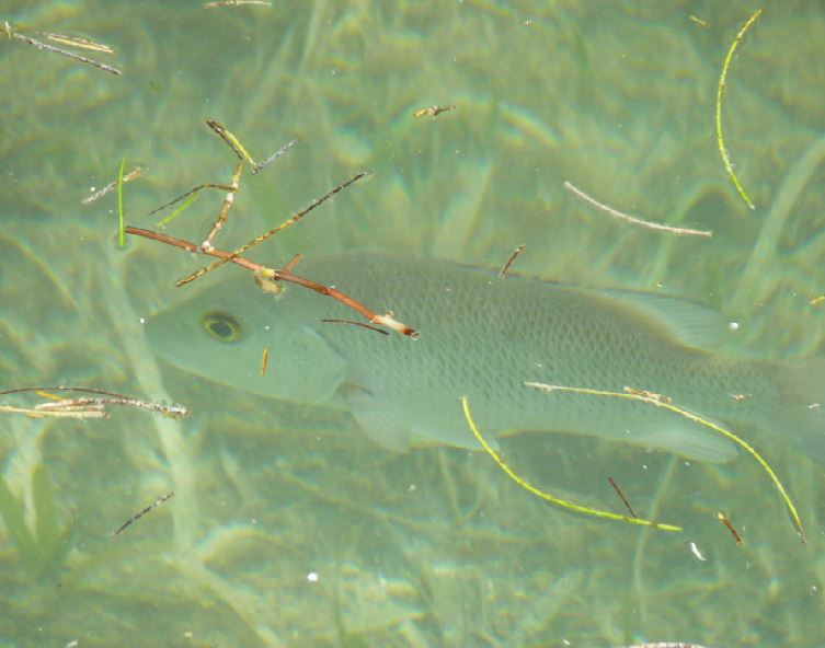 2018-04-11 grouper