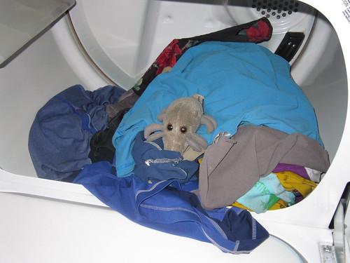 Dryer Mite
