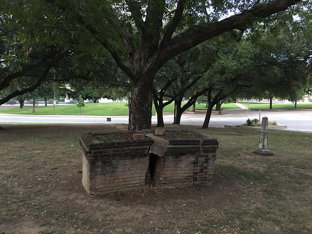 Dallas -- above ground grave split by tree