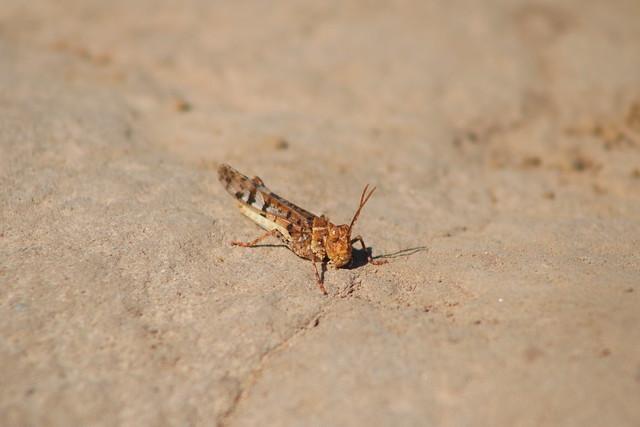 Grasshopper, Canon EOS REBEL T6I, Canon EF 75-300mm f/4-5.6 USM