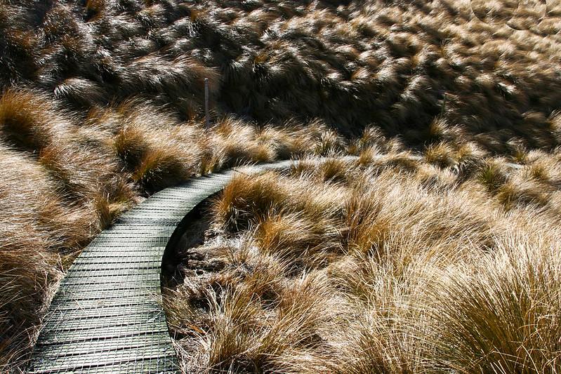 Desert Road, New Zealand 2008