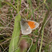Small Heath, Hodbarrow, Cumbria, England