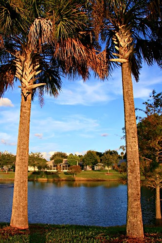 betweentwopalms reedcanalpark southdaytonaflorida palmtrees reedcanallake lake water trees scenic outdoors homes landscape park nature