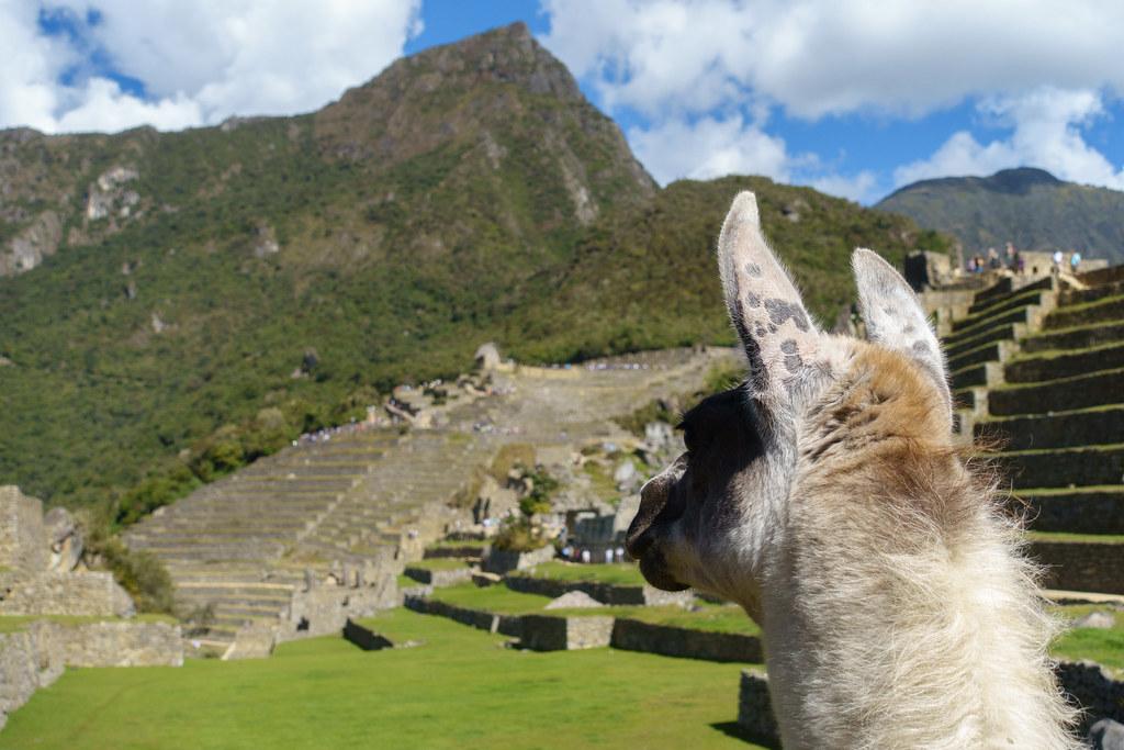 Machu Picchu-05555