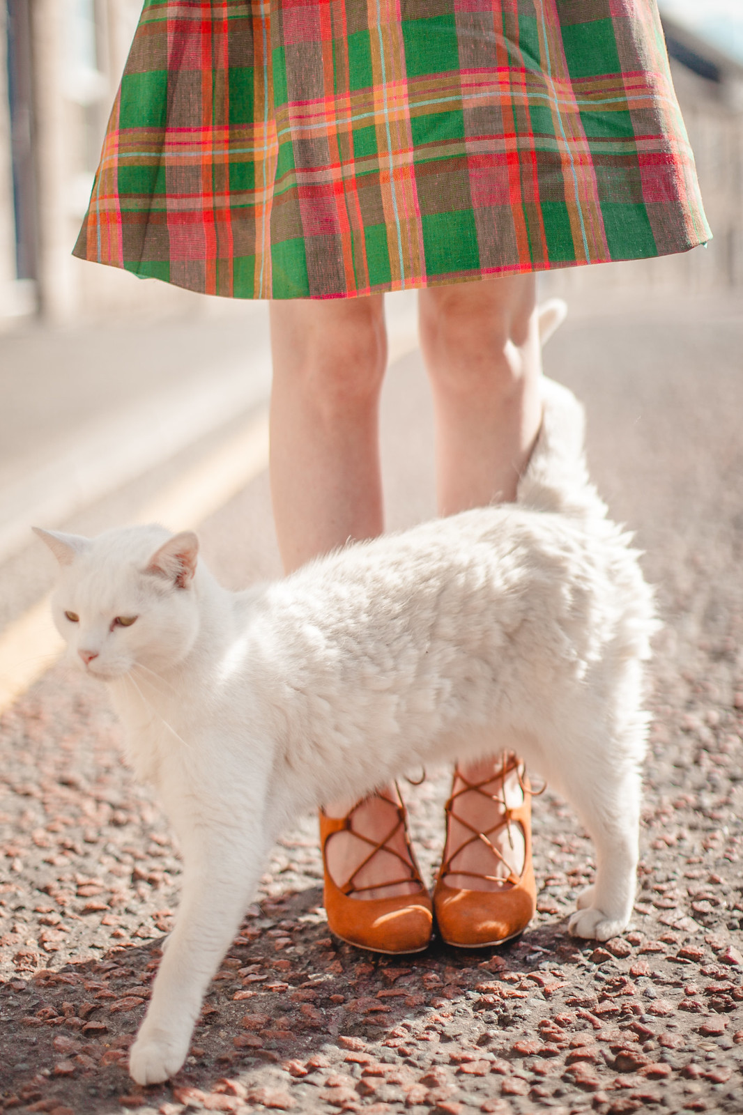 modcloth plaid dress-11