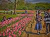 Photo:チューリップの花園で III By jun560