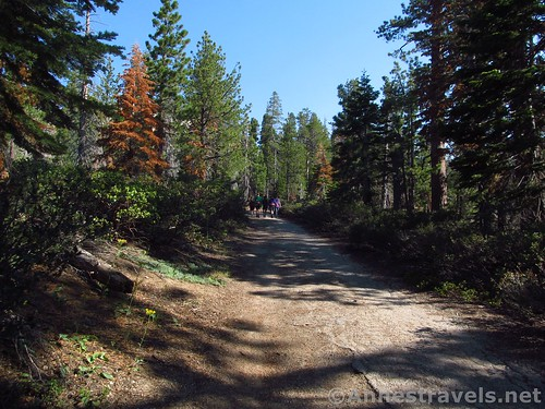 Walking up the fire road to Sentinel Dome in Yosemite National Park, California