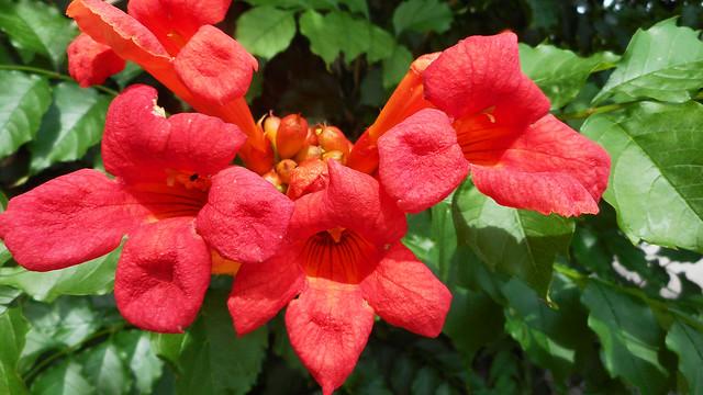 Flowers in Birštonas (04)