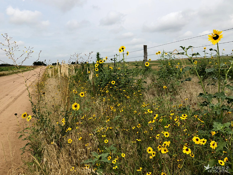 IMG_2536Wildflowers