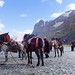 Porters and pack animals for the Kailash Kora, Tibet 2017 by reurinkjan