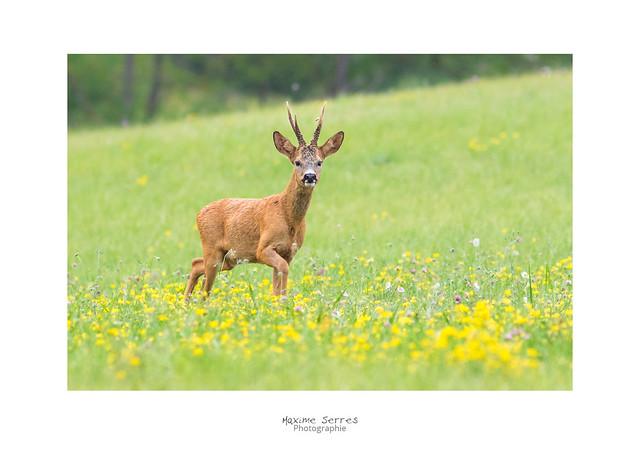 Gros pépère !, Canon EOS 7D MARK II, Canon EF 300mm f/4L IS